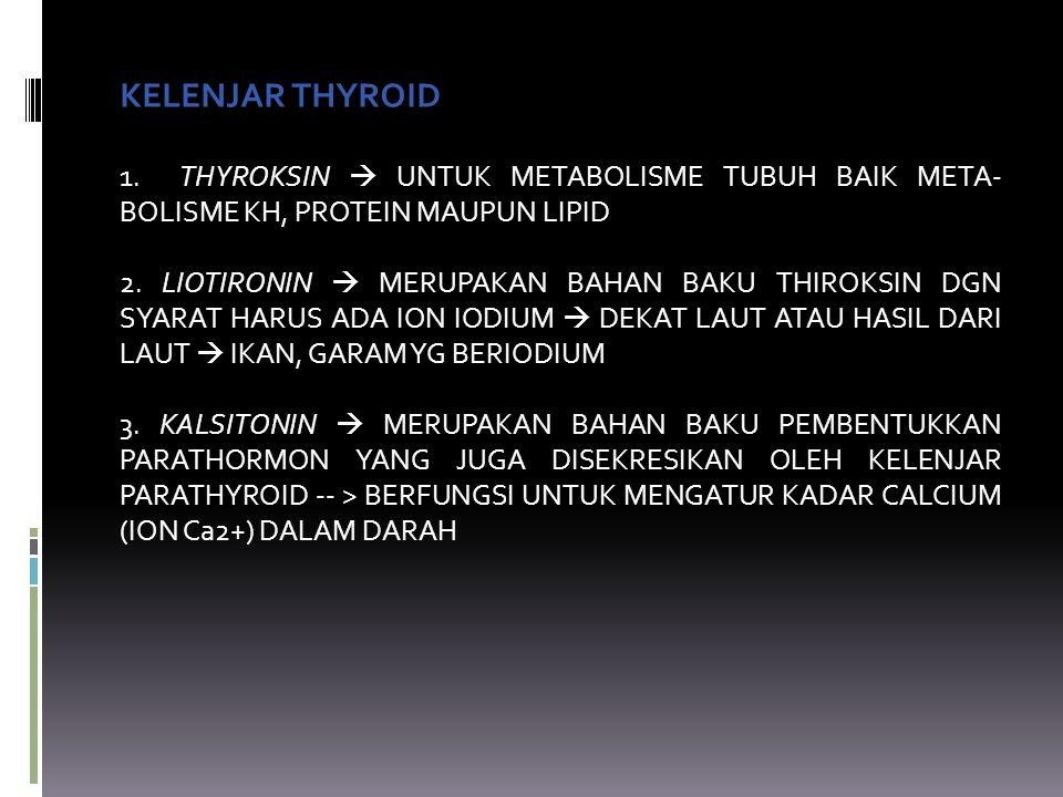 KELENJAR THYROID 1. THYROKSIN  UNTUK METABOLISME TUBUH BAIK META- BOLISME KH, PROTEIN MAUPUN LIPID 2. LIOTIRONIN  MERUPAKAN BAHAN BAKU THIROKSIN DGN