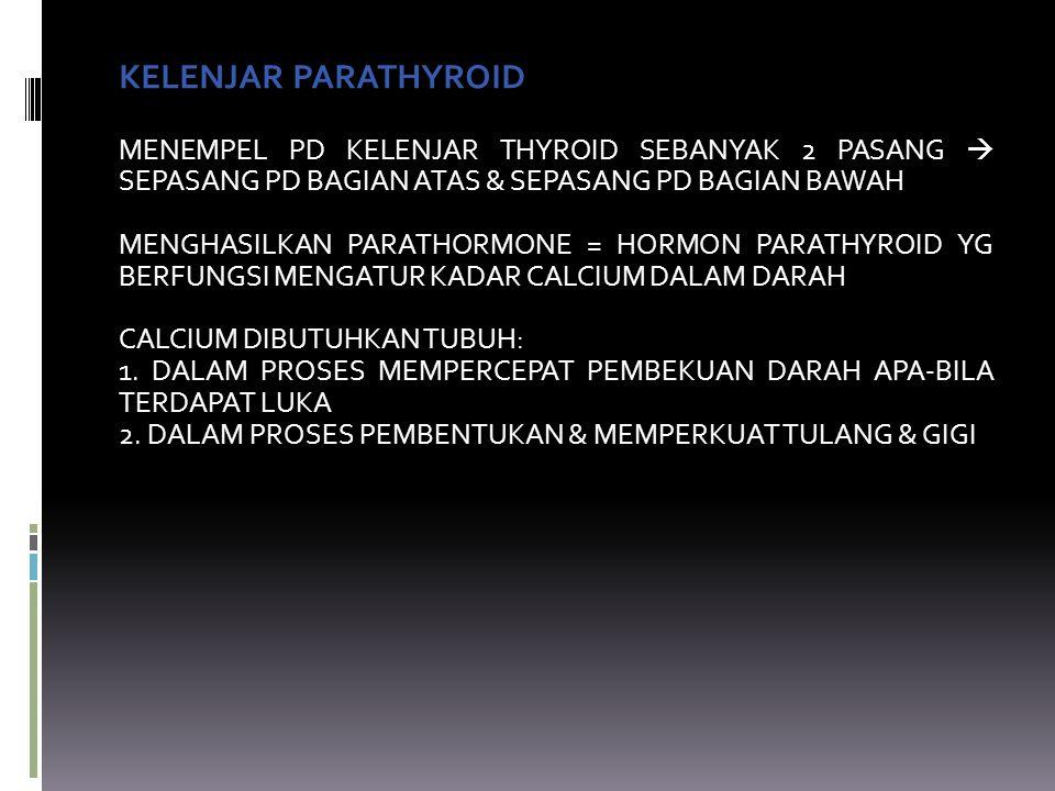 KELENJAR PARATHYROID MENEMPEL PD KELENJAR THYROID SEBANYAK 2 PASANG  SEPASANG PD BAGIAN ATAS & SEPASANG PD BAGIAN BAWAH MENGHASILKAN PARATHORMONE = HORMON PARATHYROID YG BERFUNGSI MENGATUR KADAR CALCIUM DALAM DARAH CALCIUM DIBUTUHKAN TUBUH: 1.