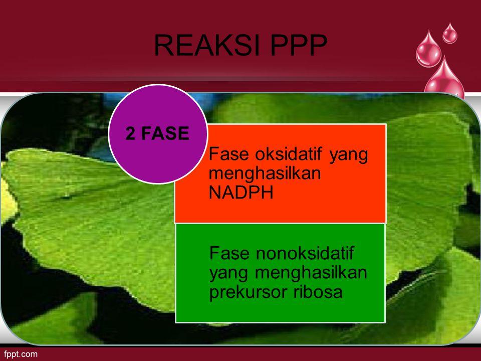 REAKSI PPP Fase oksidatif yang menghasilkan NADPH Fase nonoksidatif yang menghasilkan prekursor ribosa 2 FASE