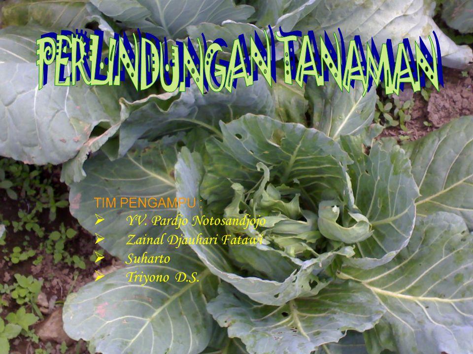 TIM PENGAMPU :  YV. Pardjo Notosandjojo  Zainal Djauhari Fatawi  Suharto  Triyono D.S.
