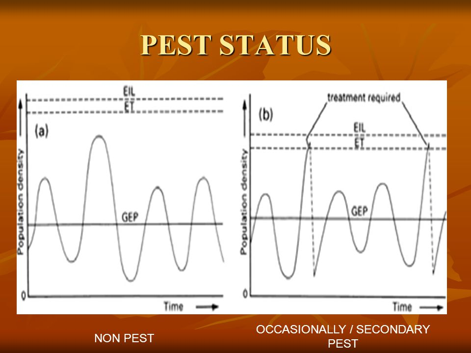 PEST STATUS NON PEST OCCASIONALLY / SECONDARY PEST