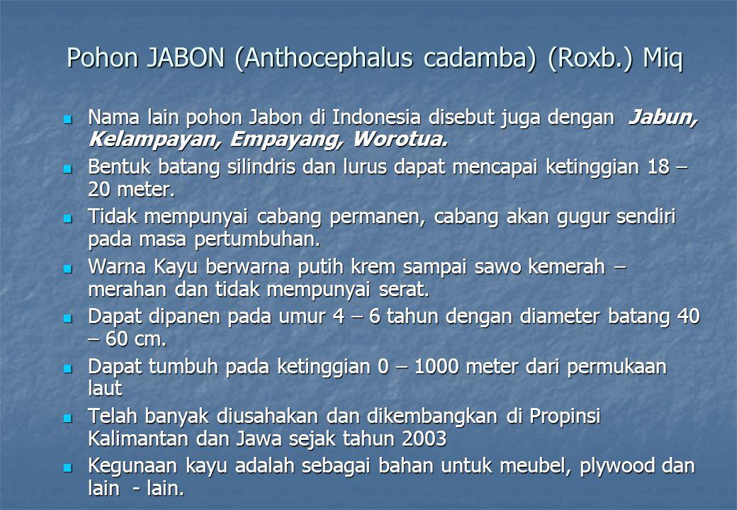 Pohon JABON (Anthocephalus cadamba) (Roxb.) Miq Nama lain pohon Jabon di Indonesia disebut juga dengan Jabun, Kelampayan, Empayang, Worotua. Nama lain