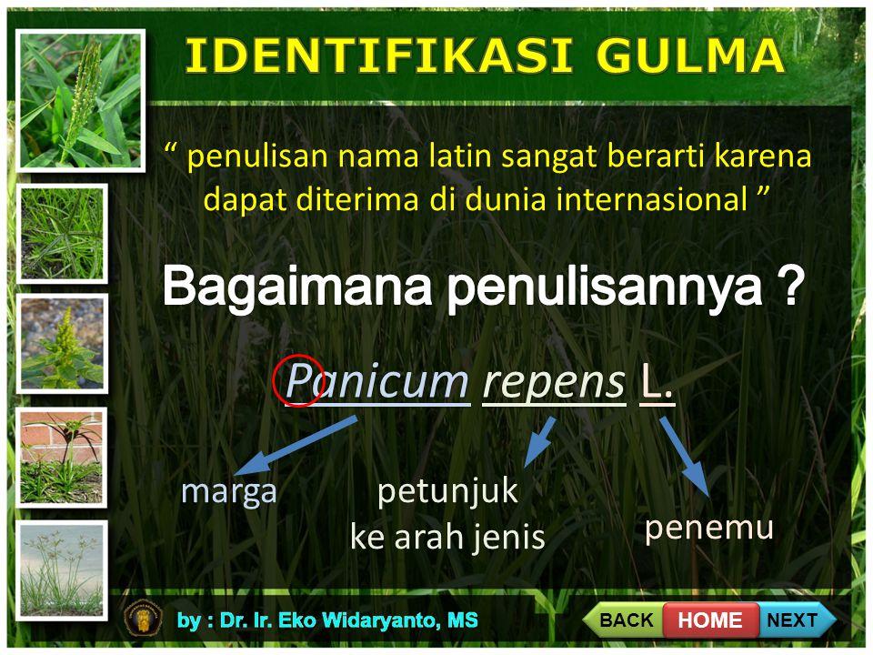""""""" penulisan nama latin sangat berarti karena dapat diterima di dunia internasional """" Panicum repens L. margapetunjuk ke arah jenis penemu BACK NEXT HO"""