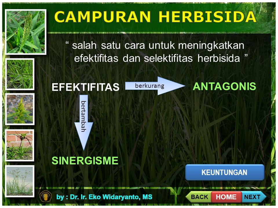 """4 """" salah satu cara untuk meningkatkan efektifitas dan selektifitas herbisida """" EFEKTIFITAS berkurang bertambah ANTAGONIS SINERGISME KEUNTUNGAN BACK N"""