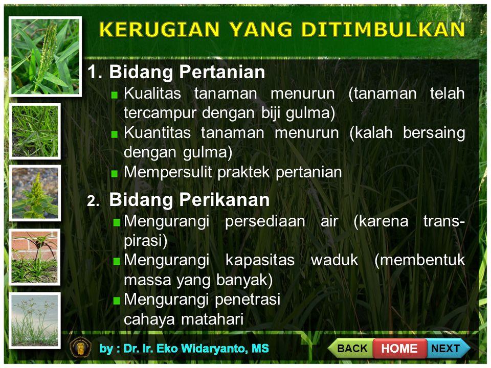 1.Bidang Pertanian Kualitas tanaman menurun (tanaman telah tercampur dengan biji gulma) Kuantitas tanaman menurun (kalah bersaing dengan gulma) Mempersulit praktek pertanian 2.