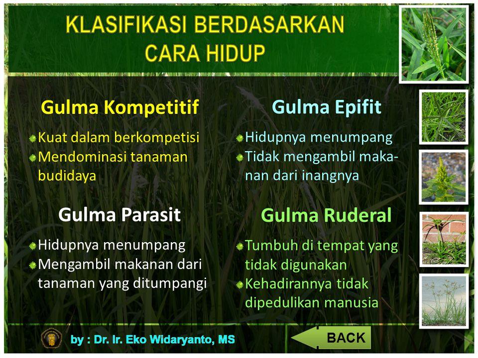 Gulma Kompetitif Kuat dalam berkompetisi Mendominasi tanaman budidaya Gulma Parasit Hidupnya menumpang Mengambil makanan dari tanaman yang ditumpangi