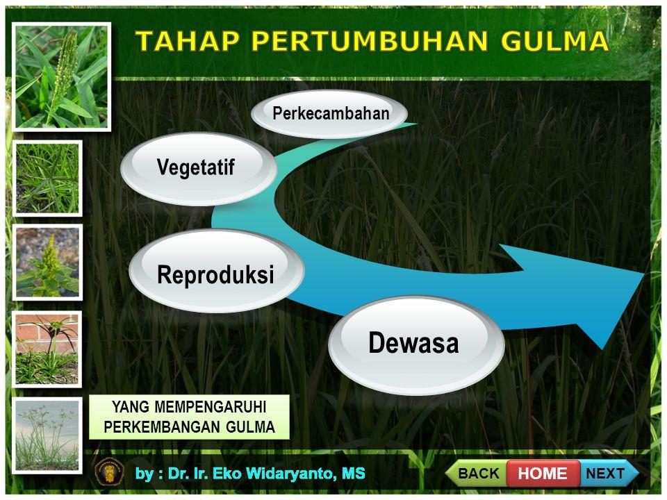 Perkecambahan Vegetatif Dewasa Reproduksi YANG MEMPENGARUHI PERKEMBANGAN GULMA YANG MEMPENGARUHI PERKEMBANGAN GULMA BACK NEXT HOME
