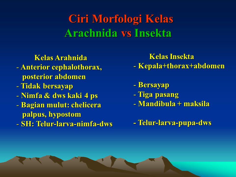 Ciri Morfologi Kelas Arachnida vs Insekta Ciri Morfologi Kelas Arachnida vs Insekta Kelas Arahnida - Anterior cephalothorax, posterior abdomen posterior abdomen - Tidak bersayap - Nimfa & dws kaki 4 ps - Bagian mulut: chelicera palpus, hypostom palpus, hypostom - SH: Telur-larva-nimfa-dws Kelas Insekta - Kepala+thorax+abdomen - Bersayap - Tiga pasang - Mandibula + maksila - Telur-larva-pupa-dws