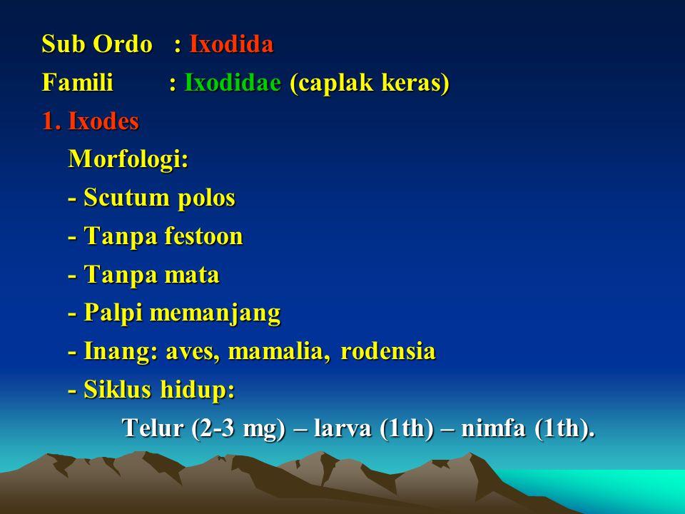 Sub Ordo : Ixodida Famili : Ixodidae (caplak keras) 1.