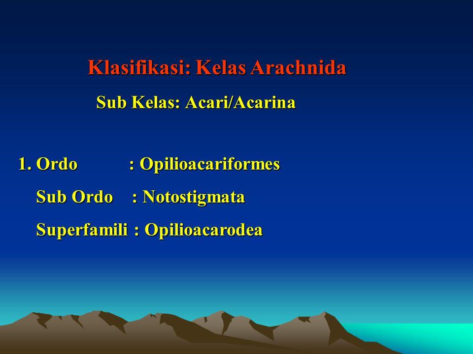 Klasifikasi: Kelas Arachnida Klasifikasi: Kelas Arachnida Sub Kelas: Acari/Acarina Sub Kelas: Acari/Acarina 1.