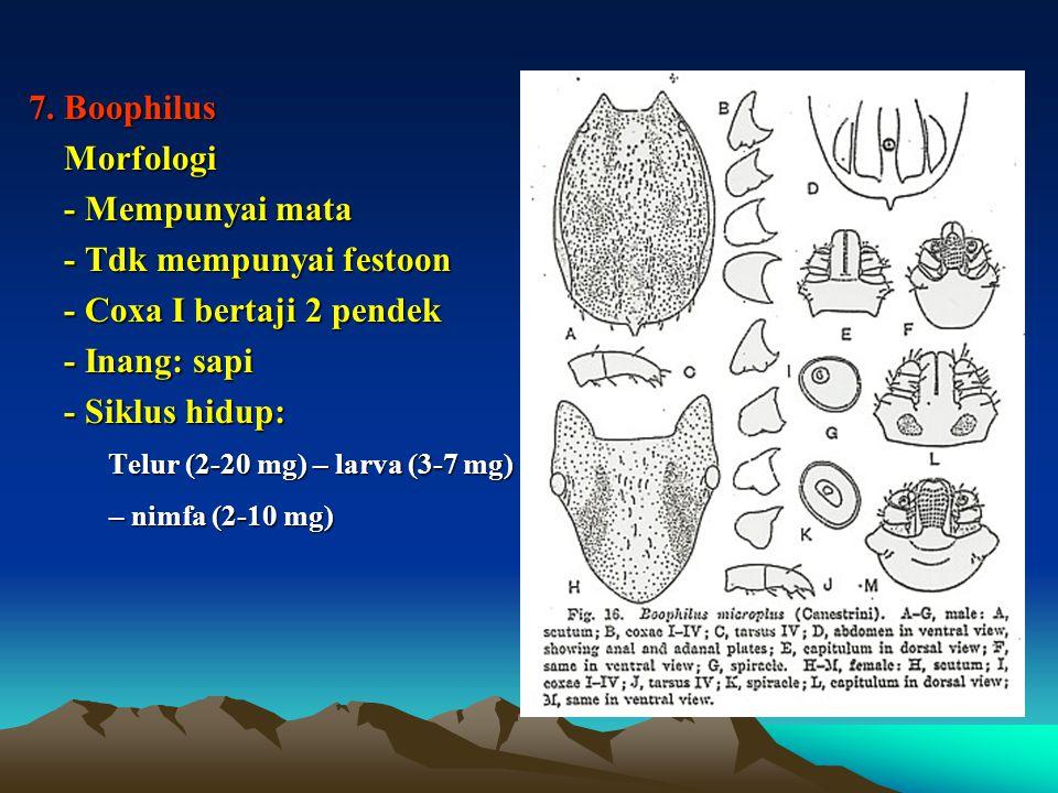 7. Boophilus Morfologi Morfologi - Mempunyai mata - Mempunyai mata - Tdk mempunyai festoon - Tdk mempunyai festoon - Coxa I bertaji 2 pendek - Coxa I