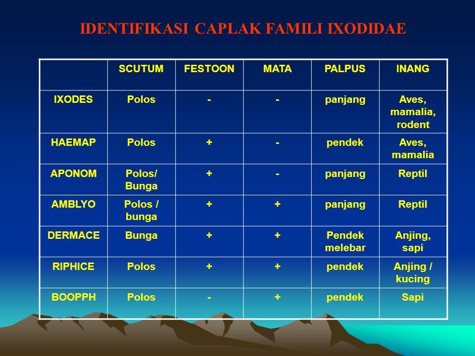 IDENTIFIKASI CAPLAK FAMILI IXODIDAE SCUTUMFESTOONMATAPALPUSINANG IXODESPolos--panjangAves, mamalia, rodent HAEMAPPolos+-pendekAves, mamalia APONOMPolos/ Bunga +-panjangReptil AMBLYOPolos / bunga ++panjangReptil DERMACEBunga++Pendek melebar Anjing, sapi RIPHICEPolos++pendekAnjing / kucing BOOPPHPolos-+pendekSapi