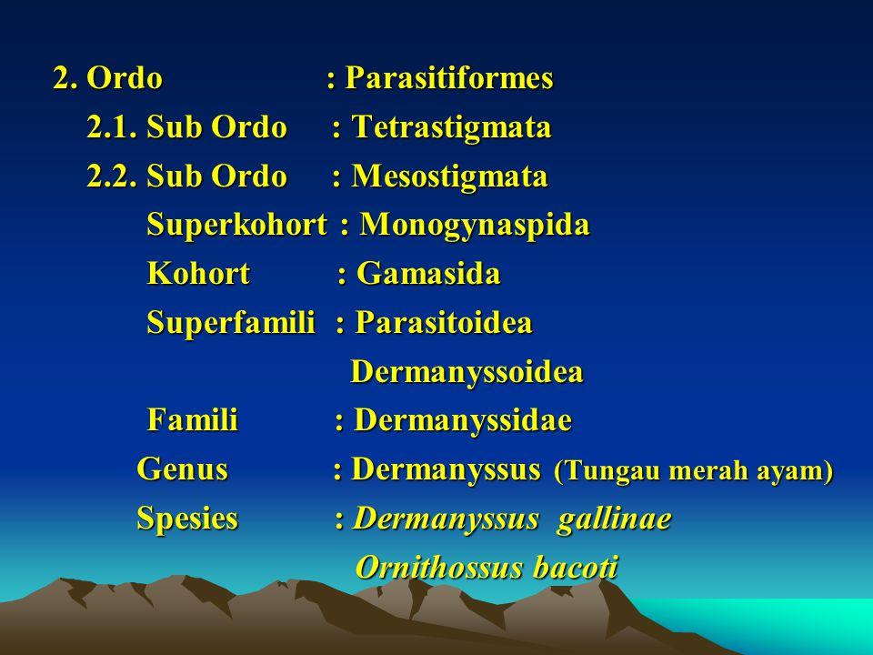 2. Ordo : Parasitiformes 2.1. Sub Ordo : Tetrastigmata 2.1. Sub Ordo : Tetrastigmata 2.2. Sub Ordo : Mesostigmata 2.2. Sub Ordo : Mesostigmata Superko