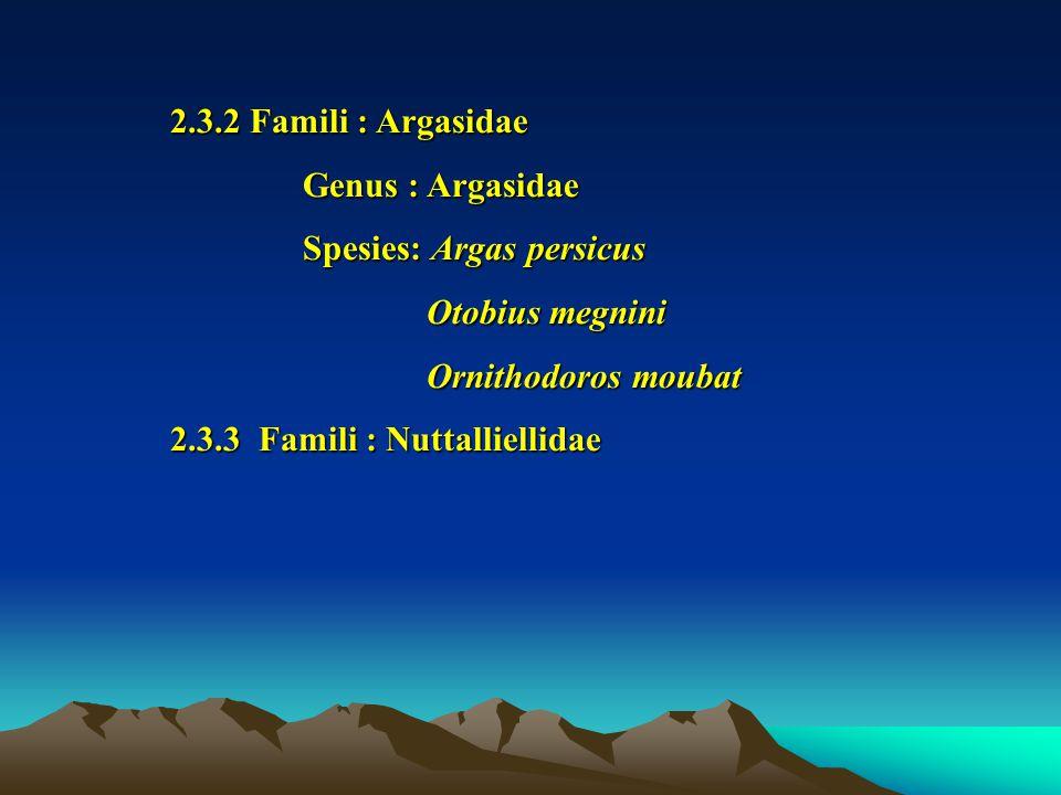 2.3.2 Famili : Argasidae Genus : Argasidae Genus : Argasidae Spesies: Argas persicus Spesies: Argas persicus Otobius megnini Otobius megnini Ornithodoros moubat Ornithodoros moubat 2.3.3 Famili : Nuttalliellidae