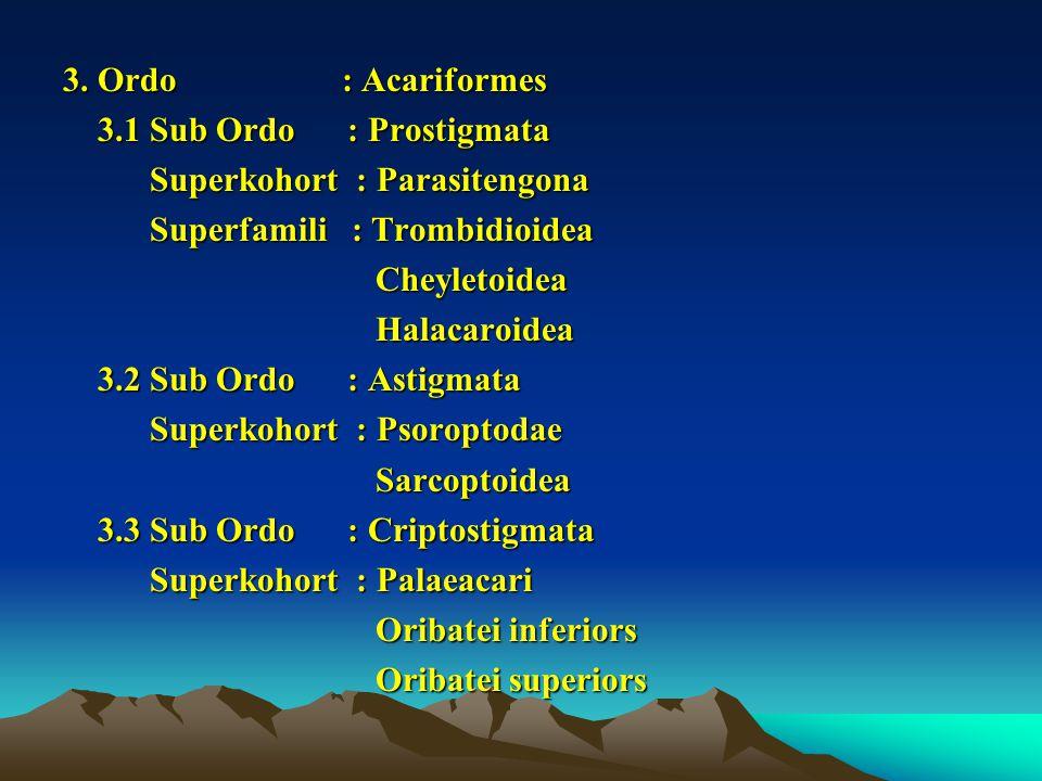 3. Ordo : Acariformes 3.1 Sub Ordo : Prostigmata 3.1 Sub Ordo : Prostigmata Superkohort : Parasitengona Superkohort : Parasitengona Superfamili : Trom