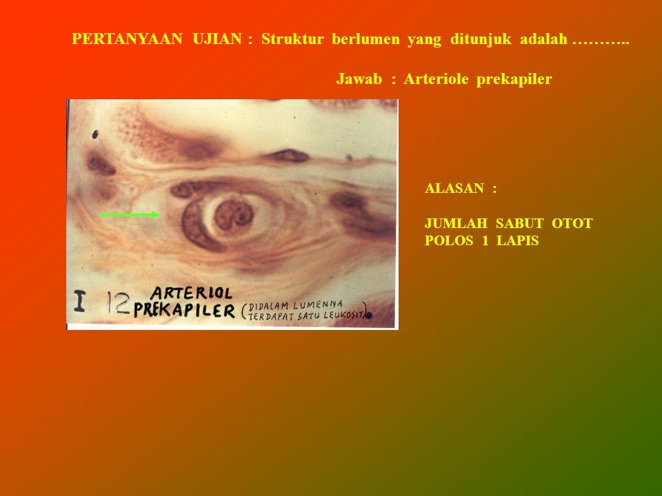 PERTANYAAN UJIAN : Struktur berlumen yang ditunjuk adalah ……….. Jawab : Arteriole prekapiler ALASAN : JUMLAH SABUT OTOT POLOS 1 LAPIS