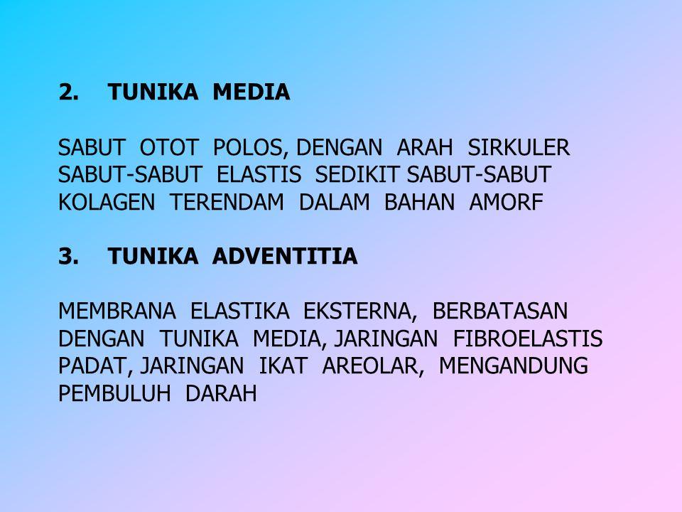 2. TUNIKA MEDIA SABUT OTOT POLOS, DENGAN ARAH SIRKULER SABUT-SABUT ELASTIS SEDIKIT SABUT-SABUT KOLAGEN TERENDAM DALAM BAHAN AMORF 3. TUNIKA ADVENTITIA