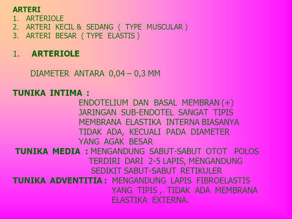 ARTERI 1. ARTERIOLE 2. ARTERI KECIL & SEDANG ( TYPE MUSCULAR ) 3. ARTERI BESAR ( TYPE ELASTIS ) 1. ARTERIOLE DIAMETER ANTARA 0,04 – 0,3 MM TUNIKA INTI