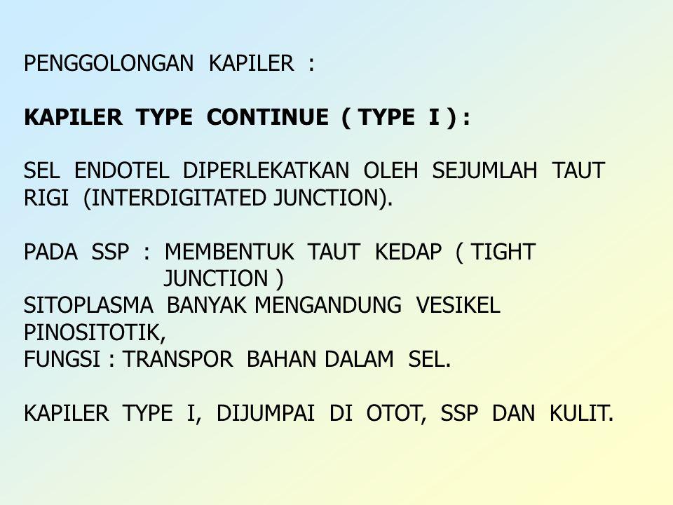 PENGGOLONGAN KAPILER : KAPILER TYPE CONTINUE ( TYPE I ) : SEL ENDOTEL DIPERLEKATKAN OLEH SEJUMLAH TAUT RIGI (INTERDIGITATED JUNCTION). PADA SSP : MEMB