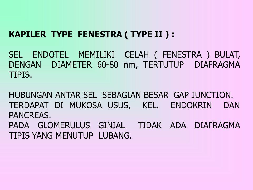 KAPILER TYPE FENESTRA ( TYPE II ) : SEL ENDOTEL MEMILIKI CELAH ( FENESTRA ) BULAT, DENGAN DIAMETER 60-80 nm, TERTUTUP DIAFRAGMA TIPIS. HUBUNGAN ANTAR