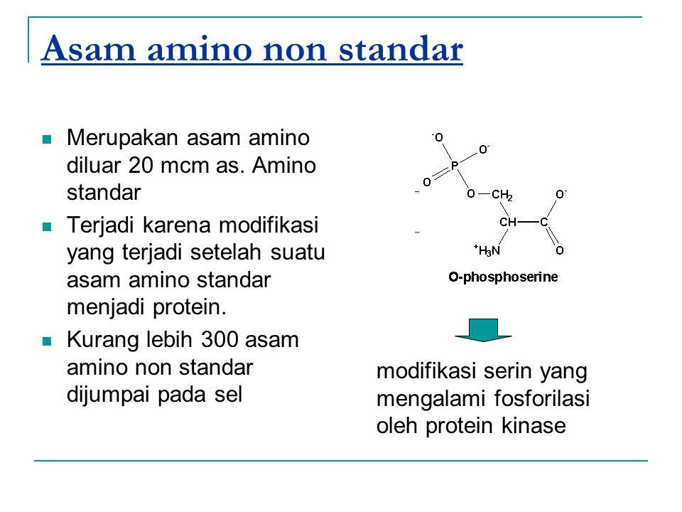 Asam amino non standar Merupakan asam amino diluar 20 mcm as. Amino standar Terjadi karena modifikasi yang terjadi setelah suatu asam amino standar me