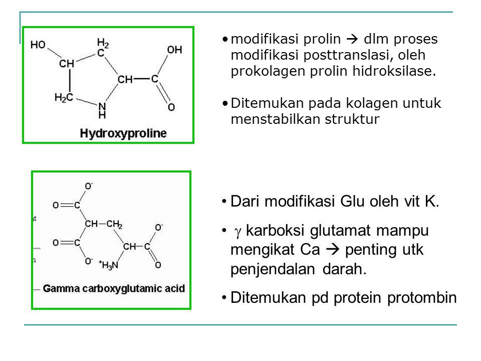 modifikasi prolin  dlm proses modifikasi posttranslasi, oleh prokolagen prolin hidroksilase. Ditemukan pada kolagen untuk menstabilkan struktur Dari