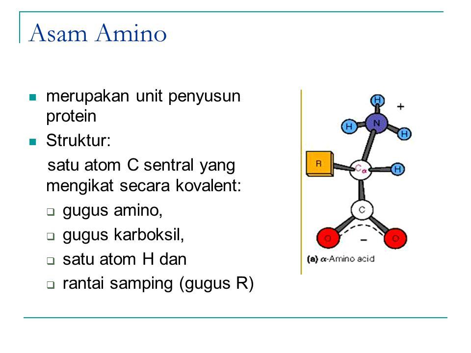 Asam Amino merupakan unit penyusun protein Struktur: satu atom C sentral yang mengikat secara kovalent:  gugus amino,  gugus karboksil,  satu atom