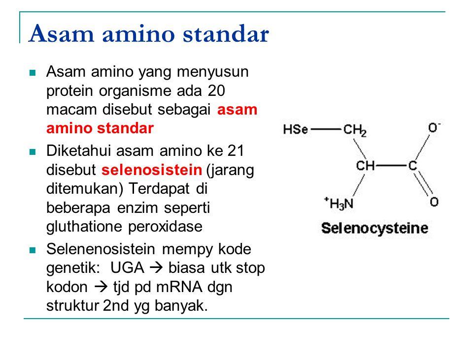 Asam amino standar Asam amino yang menyusun protein organisme ada 20 macam disebut sebagai asam amino standar Diketahui asam amino ke 21 disebut selen