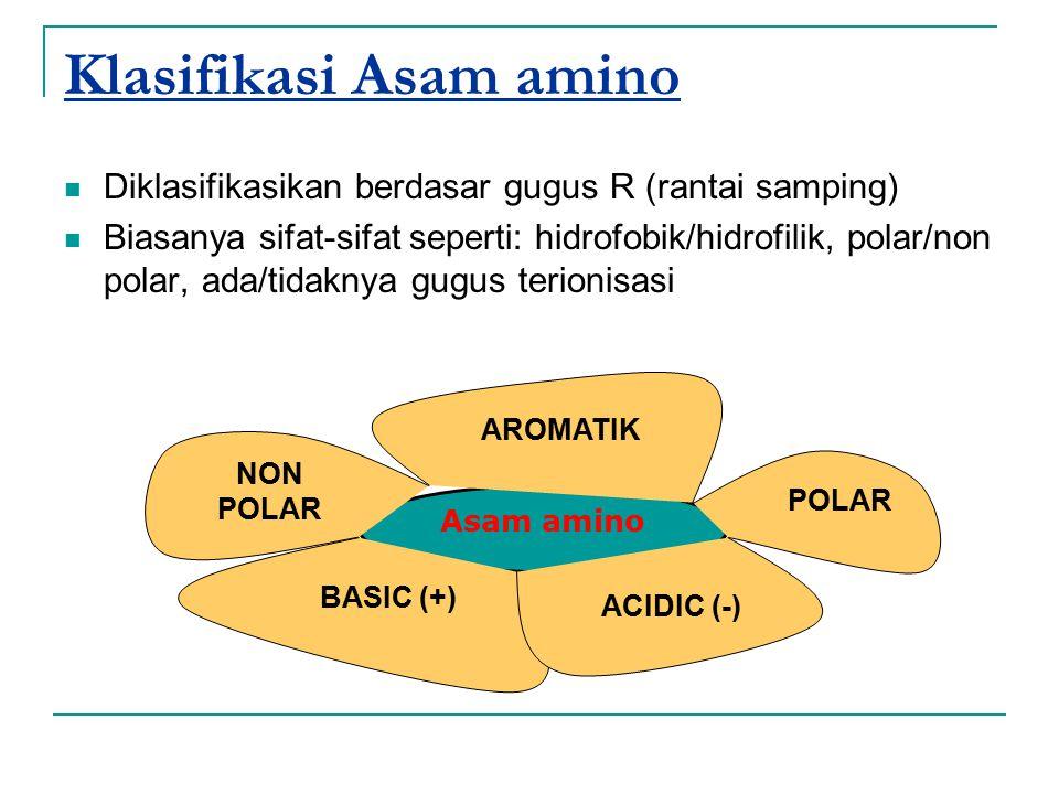 Asam amino Klasifikasi Asam amino Diklasifikasikan berdasar gugus R (rantai samping) Biasanya sifat-sifat seperti: hidrofobik/hidrofilik, polar/non po