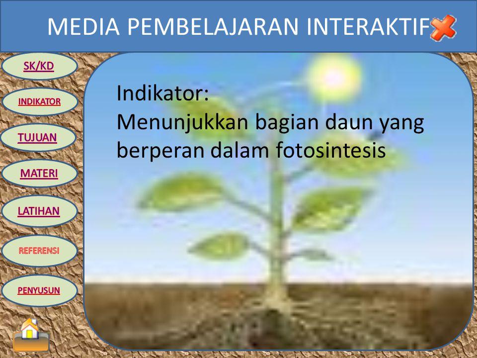 MEDIA PEMBELAJARAN INTERAKTIF Standar Kompetensi: 2. Memahami sistem dalam kehidupan tumbuhan Kompetensi Dasar: 2.1 Mengidentifikasi struktur dan fung