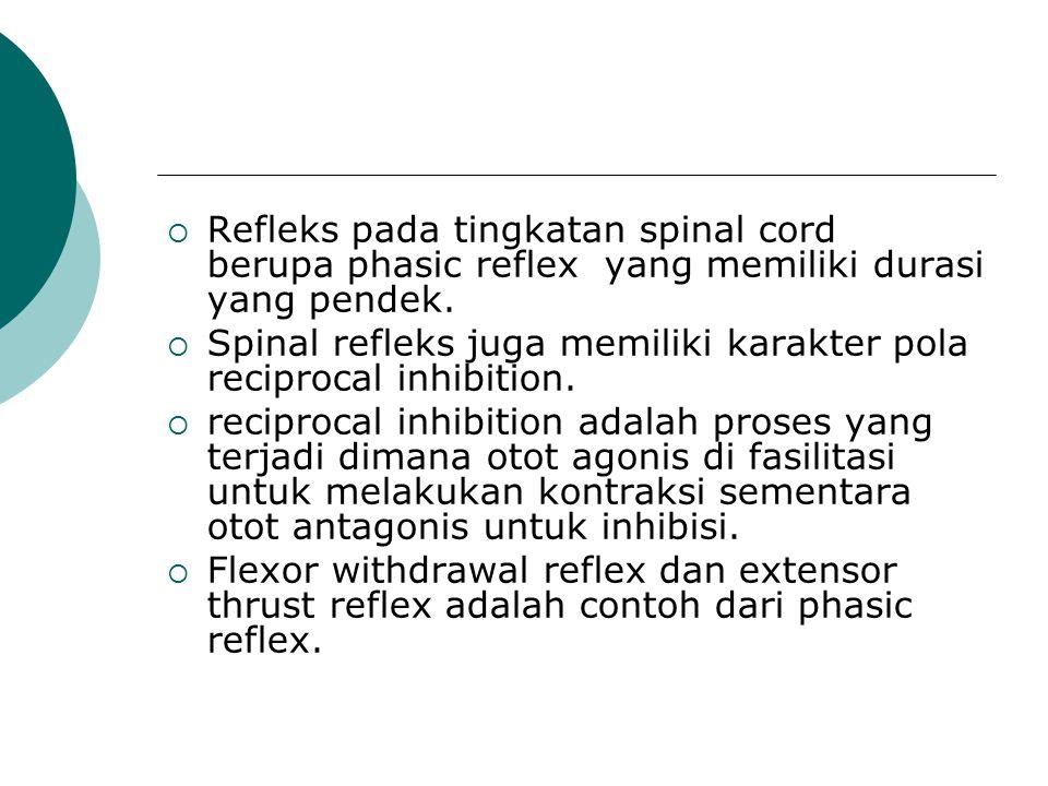 Refleks pada tingkatan spinal cord berupa phasic reflex yang memiliki durasi yang pendek.  Spinal refleks juga memiliki karakter pola reciprocal in