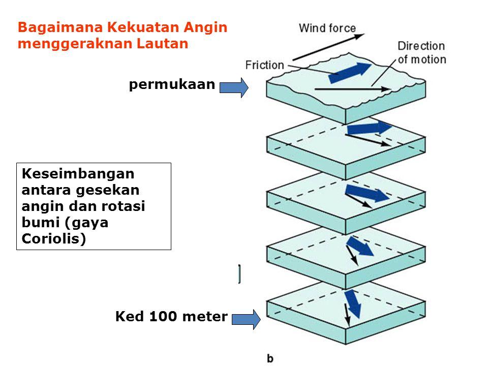 Bagaimana Kekuatan Angin menggeraknan Lautan permukaan Ked 100 meter Keseimbangan antara gesekan angin dan rotasi bumi (gaya Coriolis)