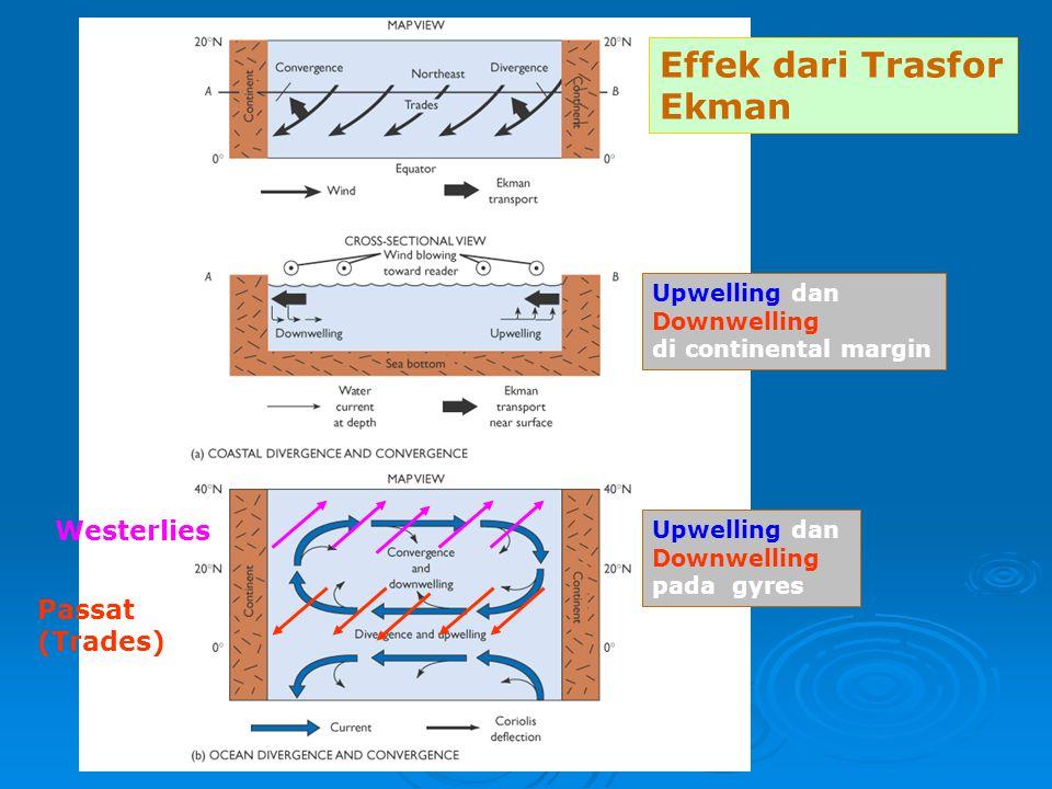 Passat (Trades) Westerlies Upwelling dan Downwelling di continental margin Upwelling dan Downwelling pada gyres Effek dari Trasfor Ekman