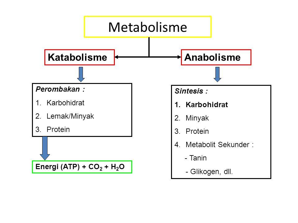 Metabolisme Katabolisme Perombakan : 1.Karbohidrat 2.Lemak/Minyak 3.Protein Energi (ATP) + CO 2 + H 2 O Anabolisme Sintesis : 1.Karbohidrat 2.Minyak 3