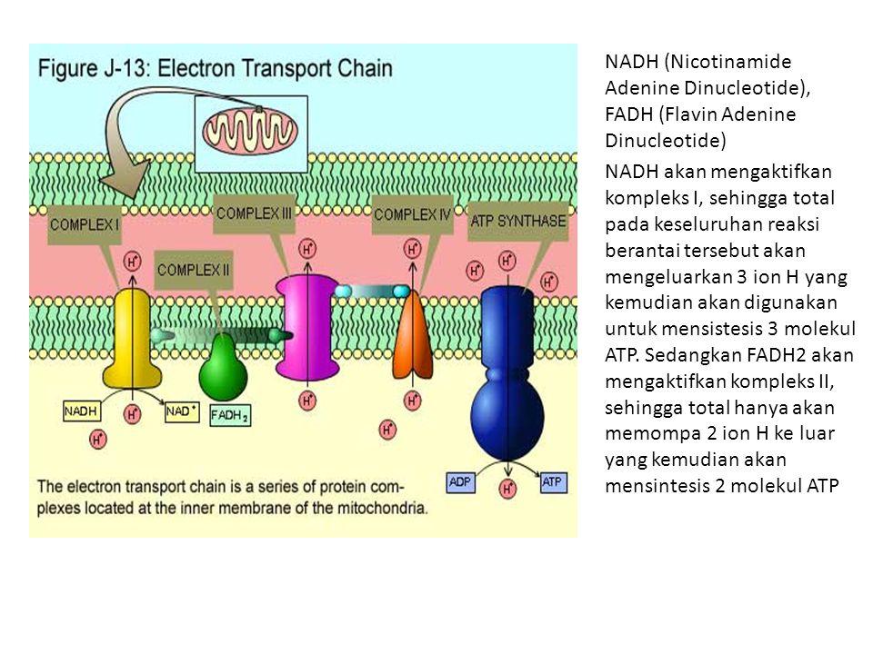 NADH (Nicotinamide Adenine Dinucleotide), FADH (Flavin Adenine Dinucleotide) NADH akan mengaktifkan kompleks I, sehingga total pada keseluruhan reaksi