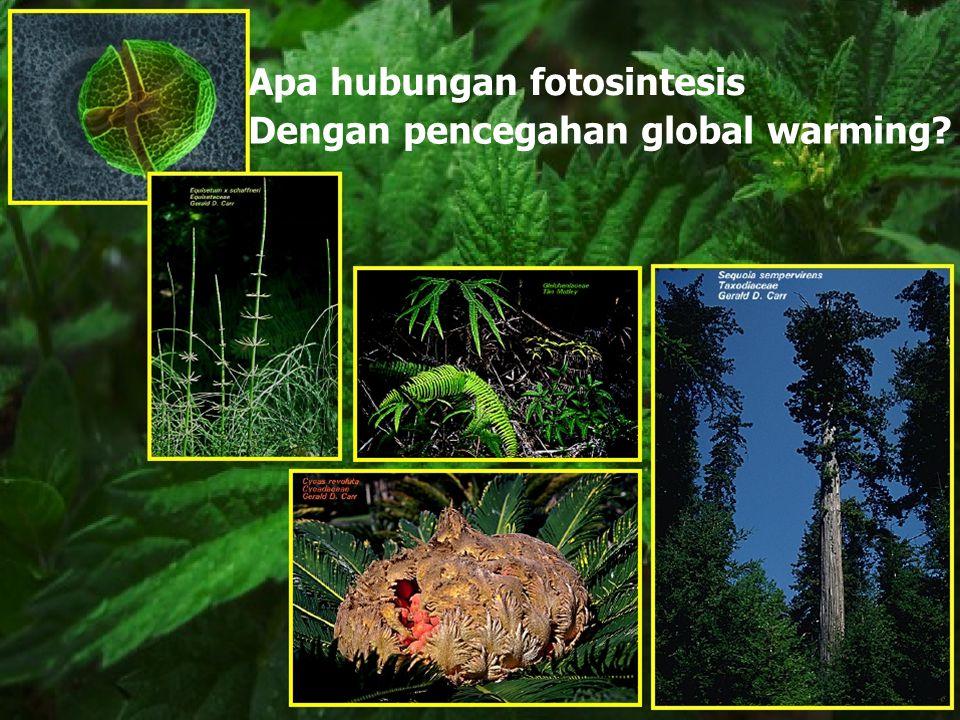 Apa hubungan fotosintesis Dengan pencegahan global warming?