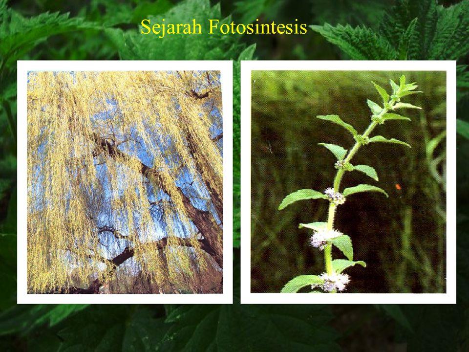 Fotosintesis Fotosintesis melibatkan tumbuh-tumbuhan yang ada di darat, perairan air tawar maupun lautan