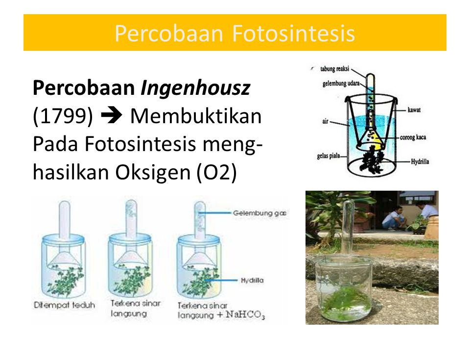 Percobaan Fotosintesis Percobaan Ingenhousz (1799)  Membuktikan Pada Fotosintesis meng- hasilkan Oksigen (O2)
