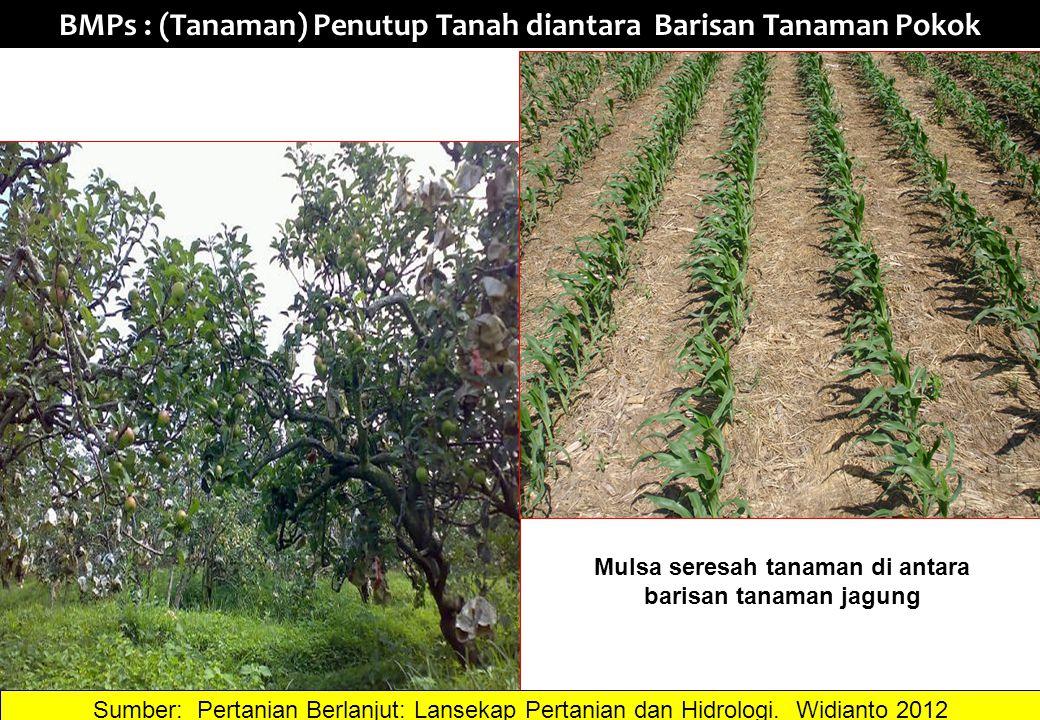 BMPs : (Tanaman) Penutup Tanah diantara Barisan Tanaman Pokok Sumber: Pertanian Berlanjut: Lansekap Pertanian dan Hidrologi. Widianto 2012 Mulsa seres