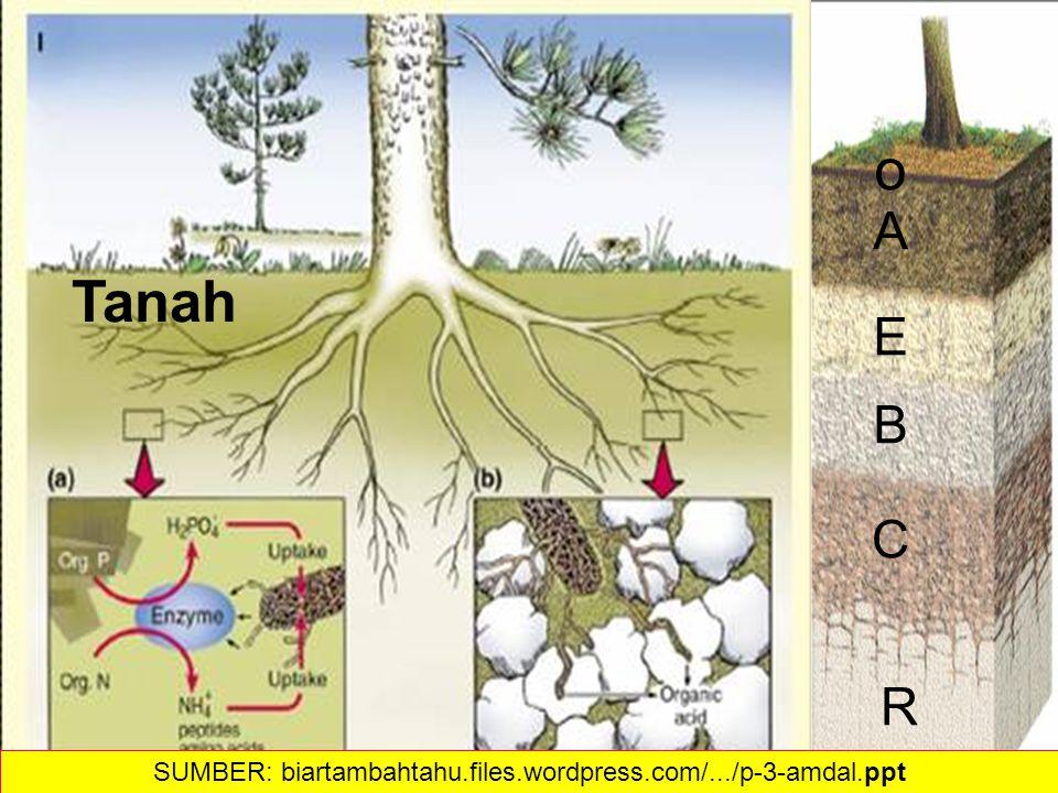 33 o A E B C R Tanah SUMBER: biartambahtahu.files.wordpress.com/.../p-3-amdal.ppt