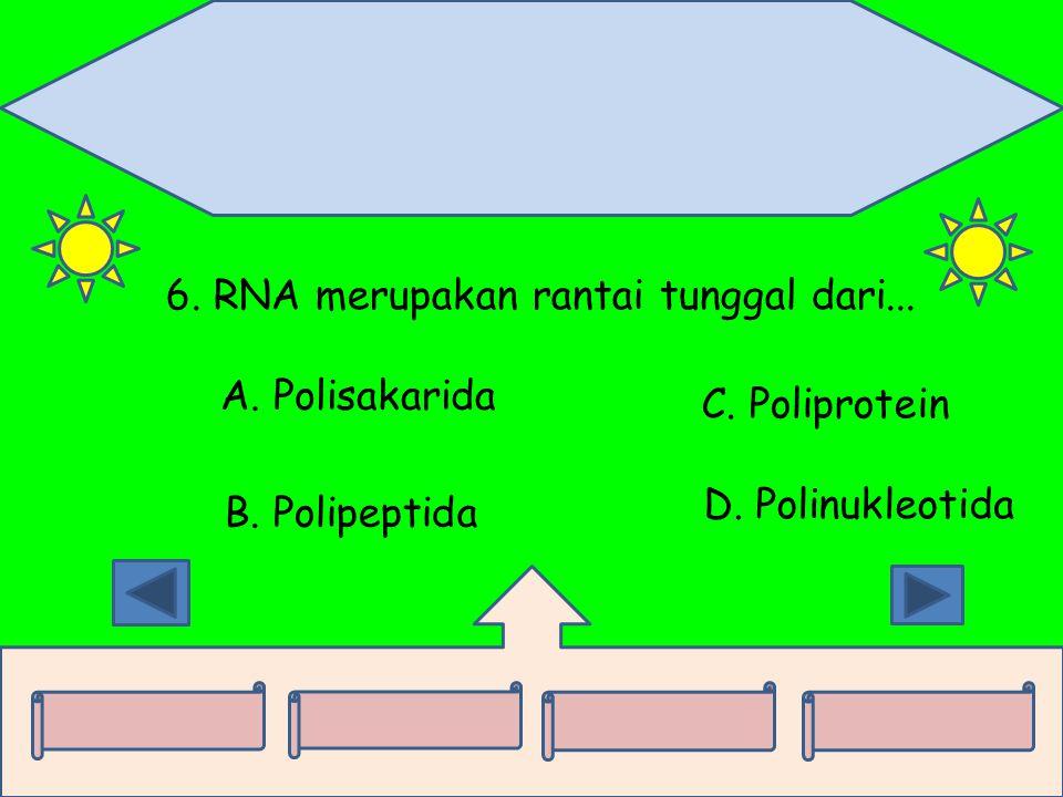 6. RNA merupakan rantai tunggal dari... A. Polisakarida B. Polipeptida C. Poliprotein D. Polinukleotida