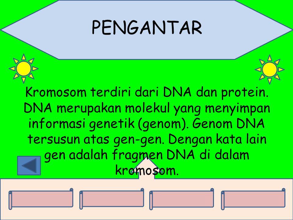 PENGANTAR Kromosom terdiri dari DNA dan protein. DNA merupakan molekul yang menyimpan informasi genetik (genom). Genom DNA tersusun atas gen-gen. Deng