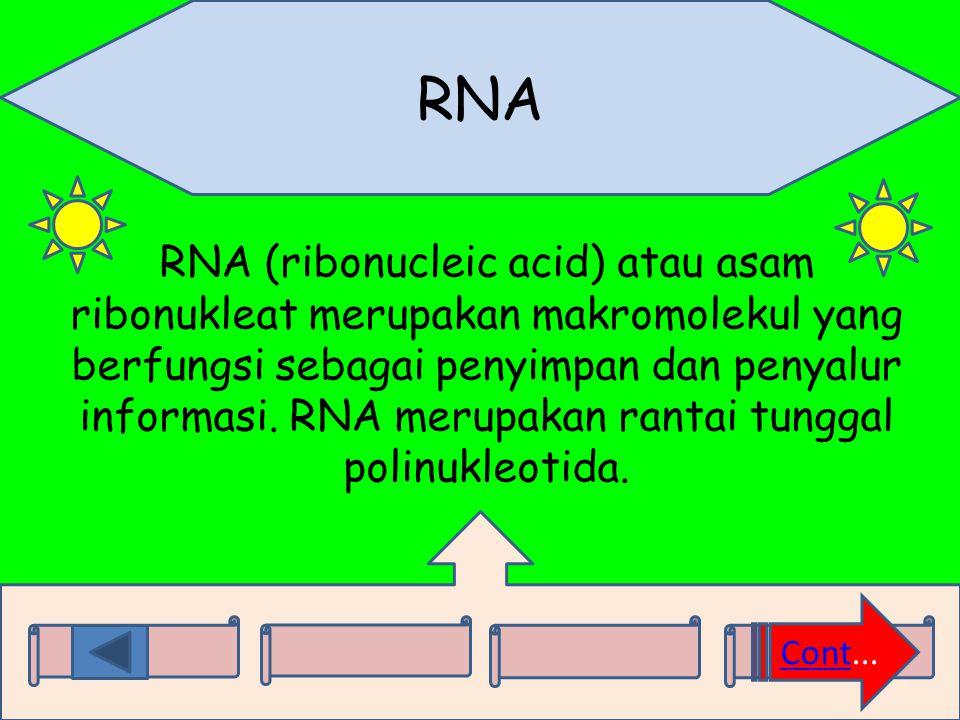 RNA RNA (ribonucleic acid) atau asam ribonukleat merupakan makromolekul yang berfungsi sebagai penyimpan dan penyalur informasi. RNA merupakan rantai