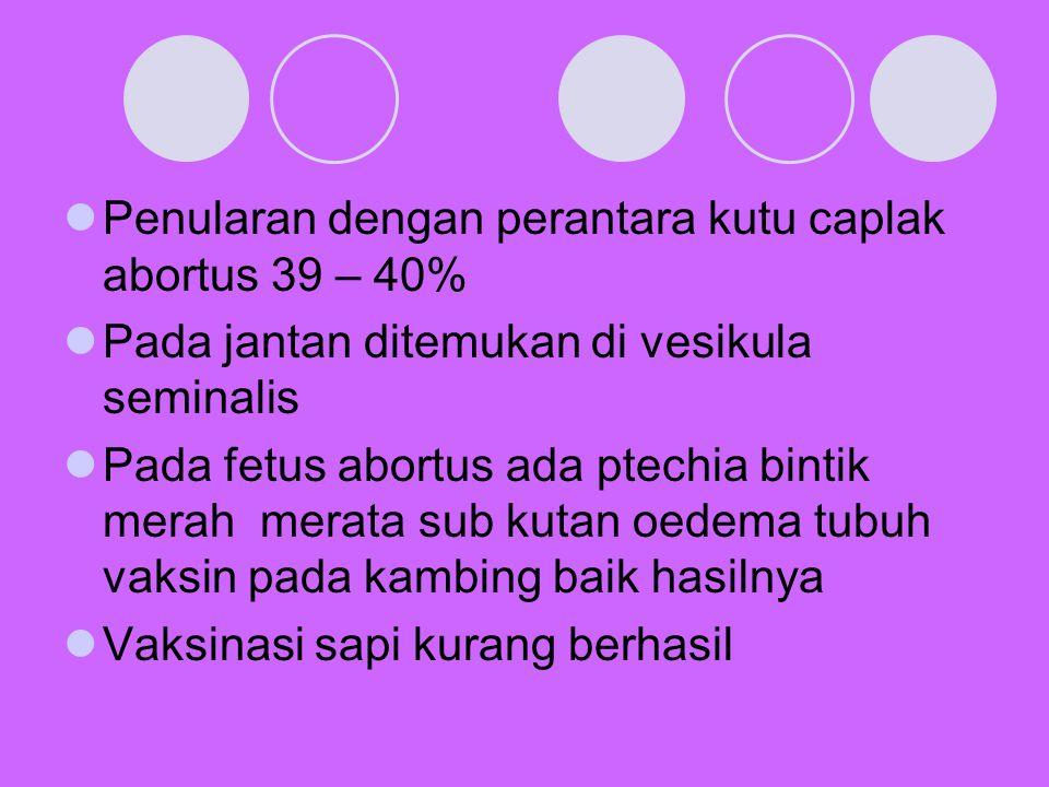 Penularan dengan perantara kutu caplak abortus 39 – 40% Pada jantan ditemukan di vesikula seminalis Pada fetus abortus ada ptechia bintik merah merata