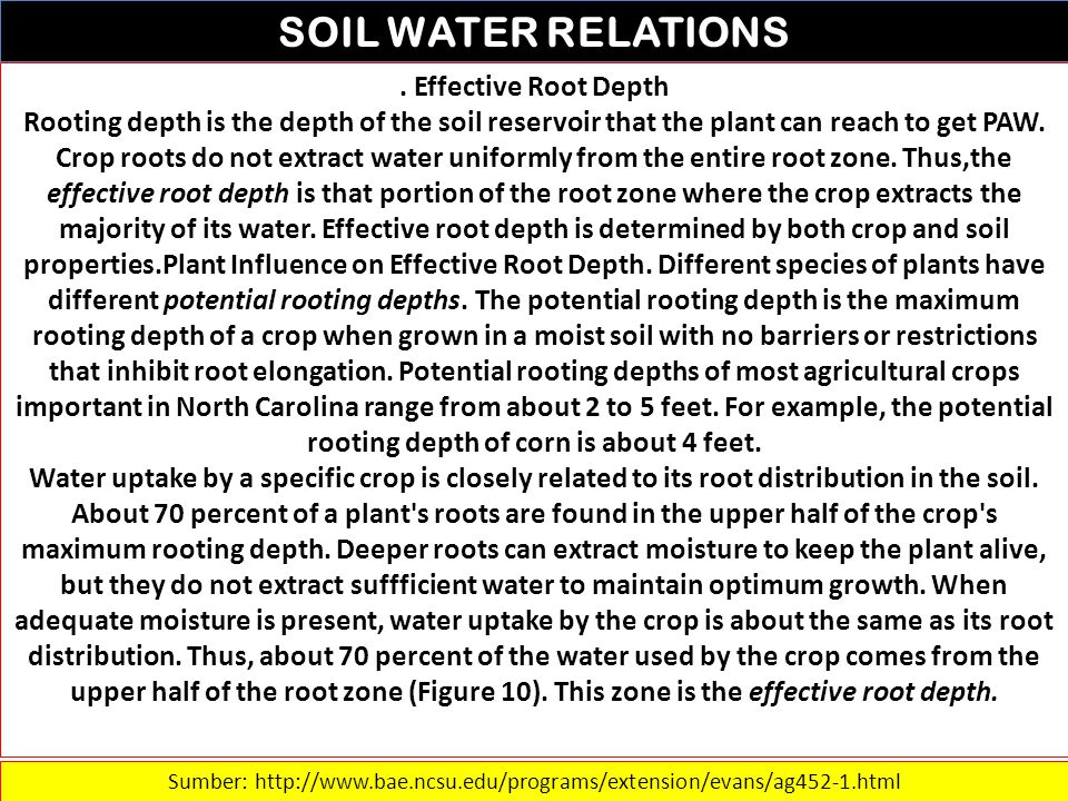 SOIL WATER RELATIONS. Effective Root Depth Rooting depth is the depth of the soil reservoir that the plant can reach to get PAW. Crop roots do not ext