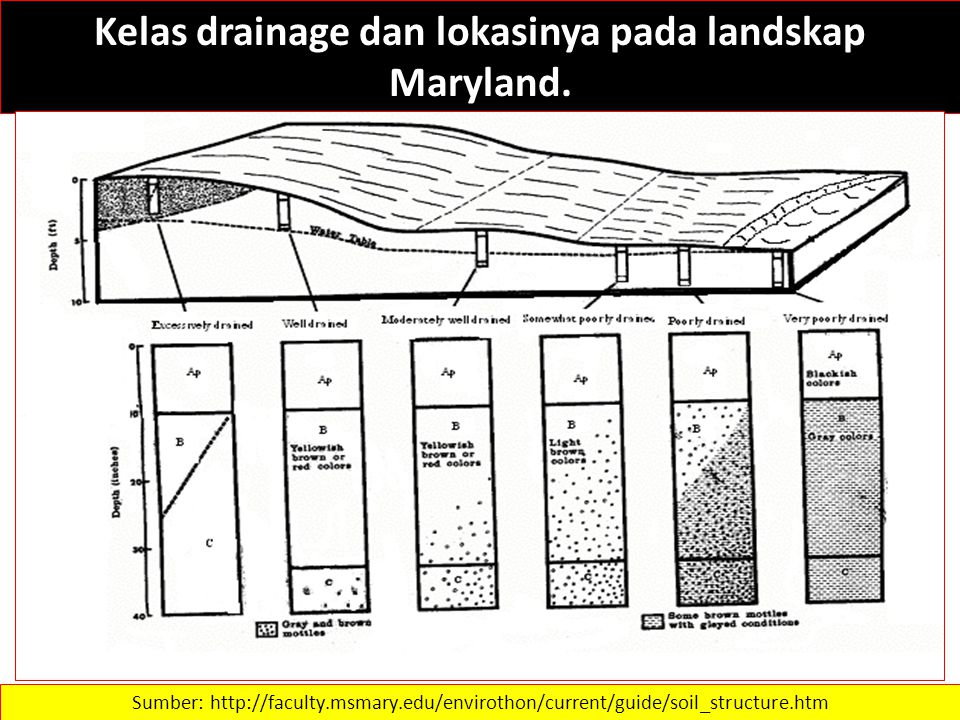 Kelas drainage dan lokasinya pada landskap Maryland. Sumber: http://faculty.msmary.edu/envirothon/current/guide/soil_structure.htm