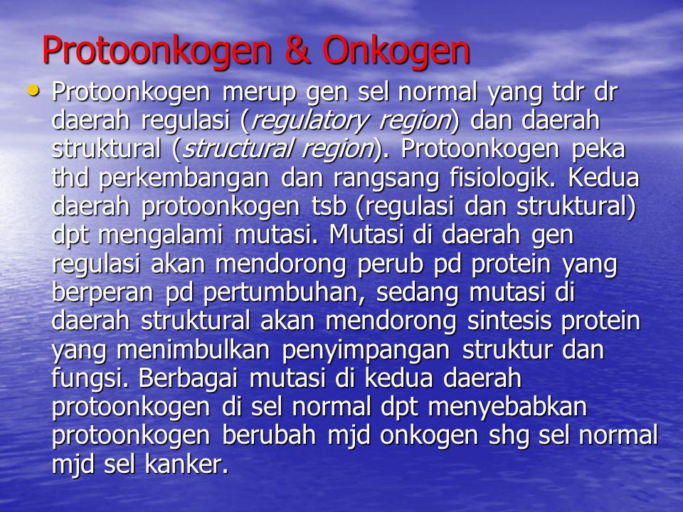 Protoonkogen & Onkogen Protoonkogen merup gen sel normal yang tdr dr daerah regulasi (regulatory region) dan daerah struktural (structural region). Pr