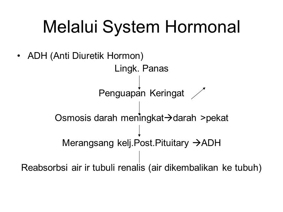 Melalui System Hormonal ADH (Anti Diuretik Hormon) Lingk. Panas Penguapan Keringat Osmosis darah meningkat  darah >pekat Merangsang kelj.Post.Pituita