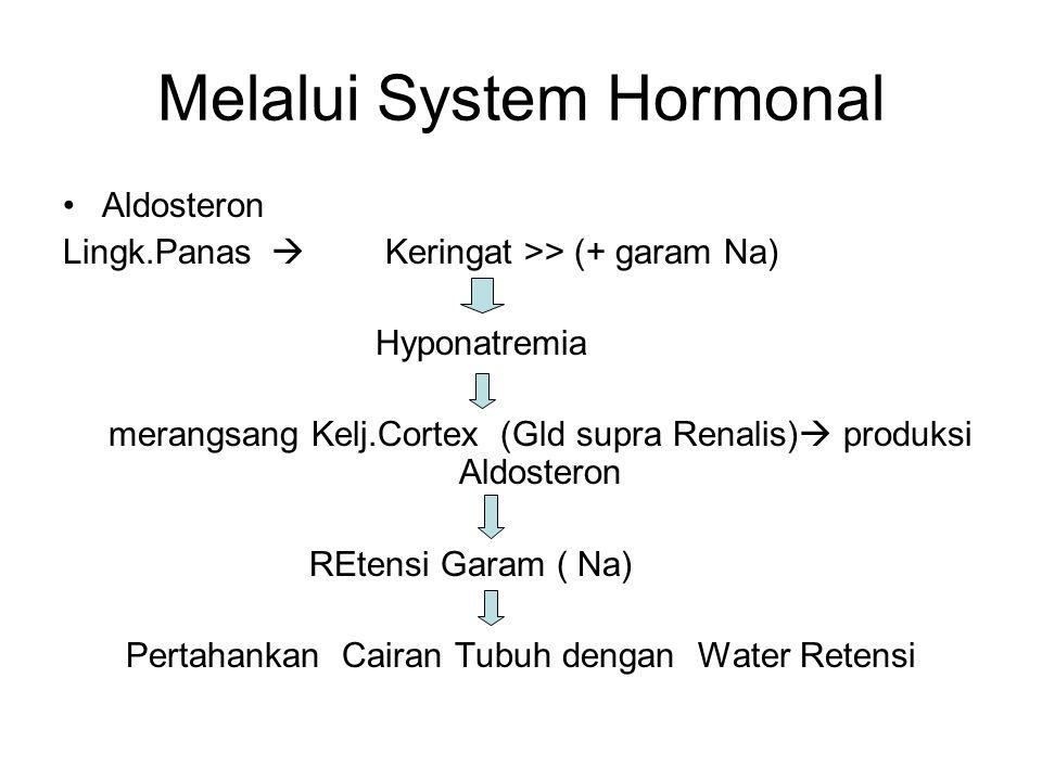 Melalui System Hormonal Aldosteron Lingk.Panas  Keringat >> (+ garam Na) Hyponatremia merangsang Kelj.Cortex (Gld supra Renalis)  produksi Aldostero