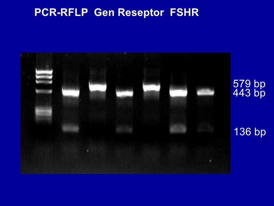 579 bp 136 bp 443 bp PCR-RFLP Gen Reseptor FSHR